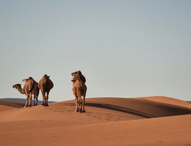 3 days from Marrakech to merzouga desert